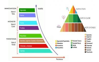 Profumo e Piramide Olfattiva